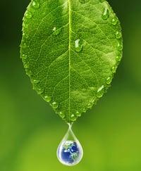 Leaf_001
